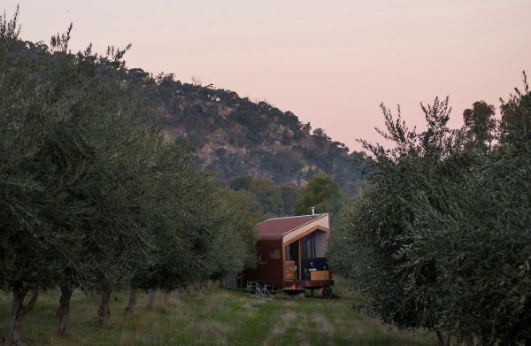 Shacky in the Olive Grove