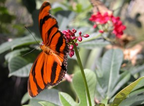Butterfly Farm - eAccommodation