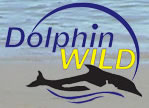 Dolphin Wild - eAccommodation