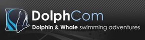 Dolphcom - Dolphin  Whale Swimming Adventures - eAccommodation