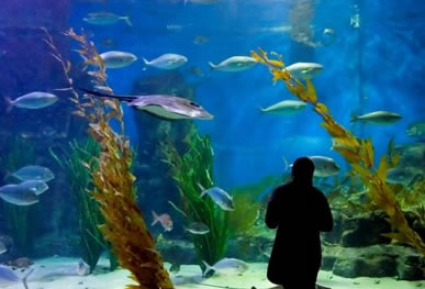 Melbourne Aquarium - eAccommodation