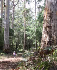Warren River Loop Walk - eAccommodation