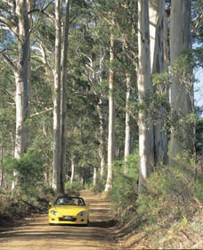 Mount Shadforth Scenic Drive - eAccommodation