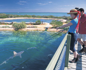 Shark Bay Marine Park - eAccommodation
