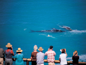 Whale Watching At Head Of Bight - eAccommodation