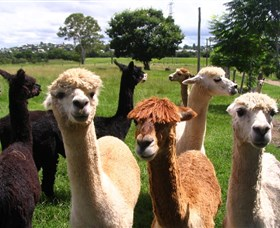 Banyandah Alpacas - eAccommodation