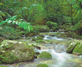Mossman Gorge Daintree National Park - eAccommodation