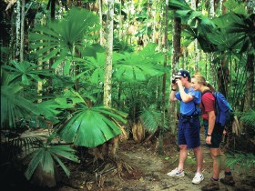 Mount Sorrow Ridge Trail Daintree National Park - eAccommodation