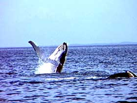 Whale Watching - eAccommodation