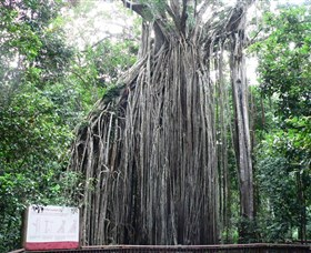Curtain Fig National Park - eAccommodation