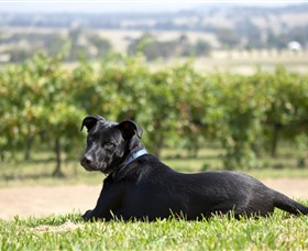 Moothi Estate Vineyard and Cellar Door - eAccommodation