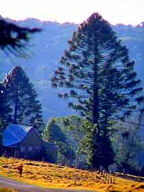 Bunya Mountains National Park - eAccommodation