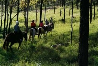 Hunter Valley Horse Riding and Adventures - eAccommodation