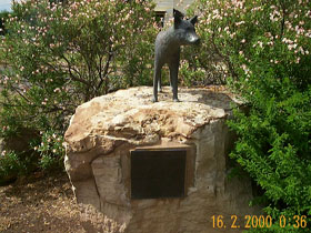 Dingo Statue - eAccommodation