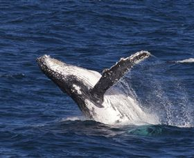 Whale Watching on Keswick Island