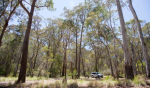 Coolah Tops National Park - eAccommodation