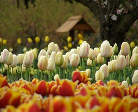 Tulip Top Gardens - eAccommodation