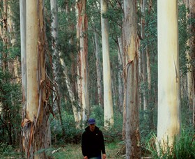 Blue Gum Forest - eAccommodation