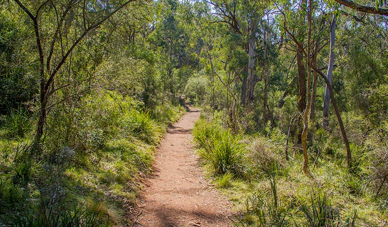 Mares Forest Creek walking track - eAccommodation
