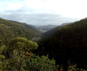 Nattai Gorge Lookout - eAccommodation