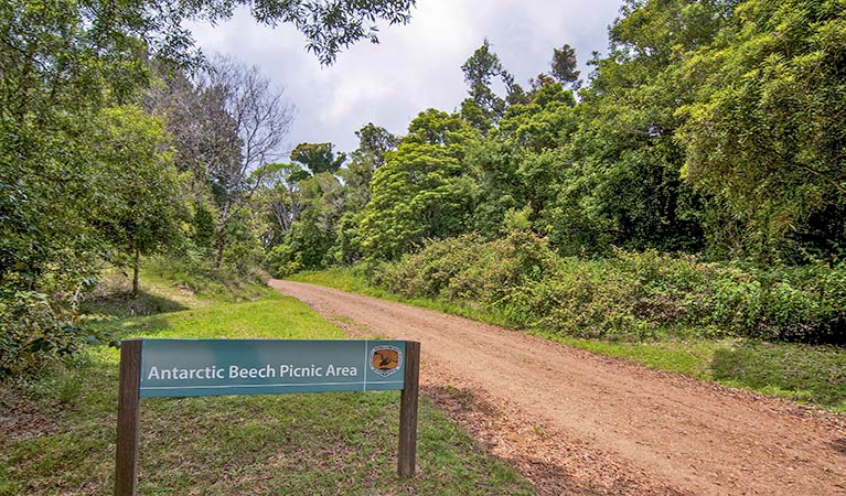 Antarctic Beech picnic area - eAccommodation