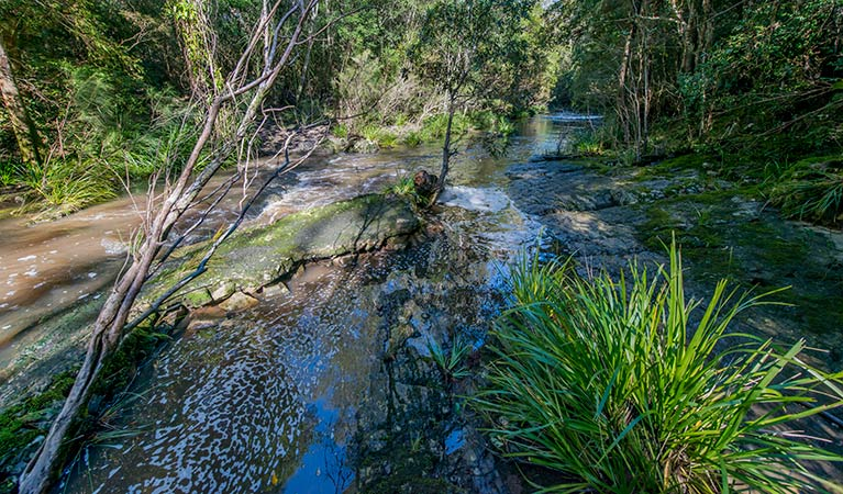 Dawson River walking track - eAccommodation