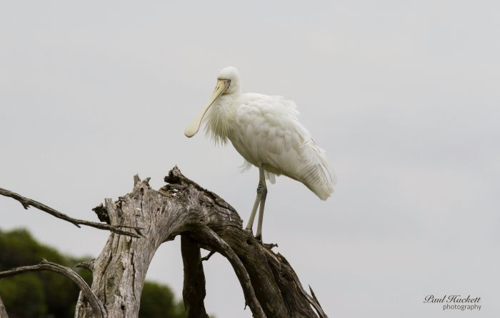 Melbourne Birding Tours - eAccommodation