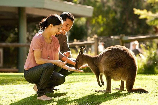 Very Best of Perth Tour - Wildlife Park  City Highlights Tour - eAccommodation