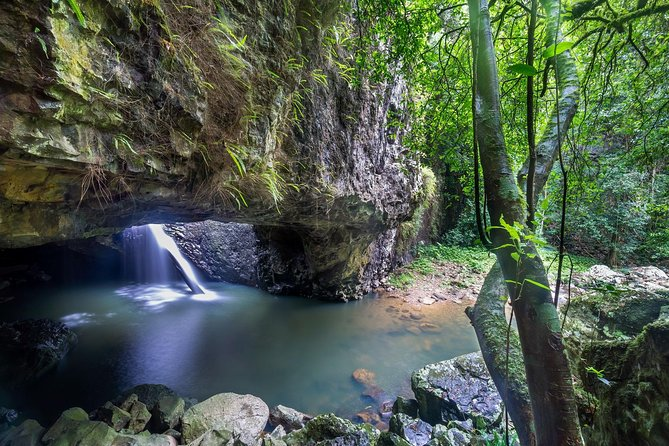 Springbrook and Tamborine Rainforest Tour Including Natural Bridge and Glow Worm Cave - eAccommodation