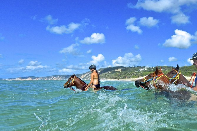 Horse Swimming Ride from Rainbow Beach - eAccommodation