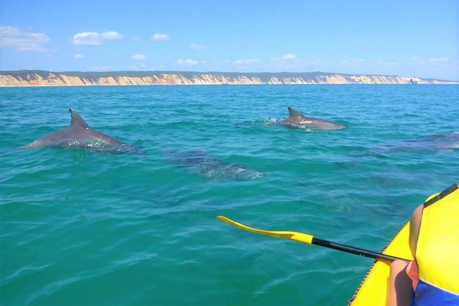 Half-Day Kayak with Dolphins and 4WD Beach Drive from Rainbow Beach - eAccommodation