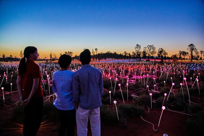 Uluru Field of Light Sunrise Tour - eAccommodation