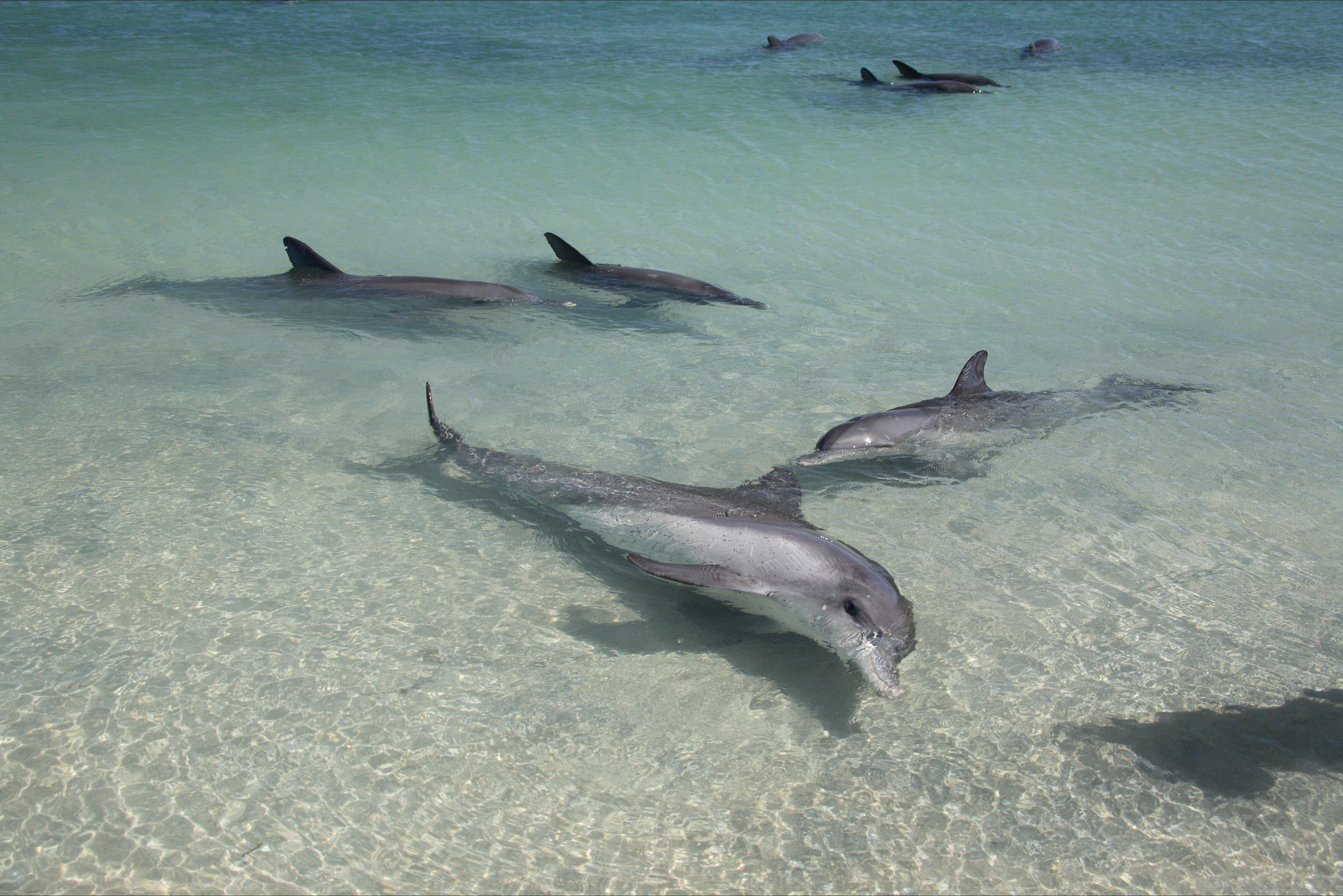 Dolphins of Monkey Mia - eAccommodation