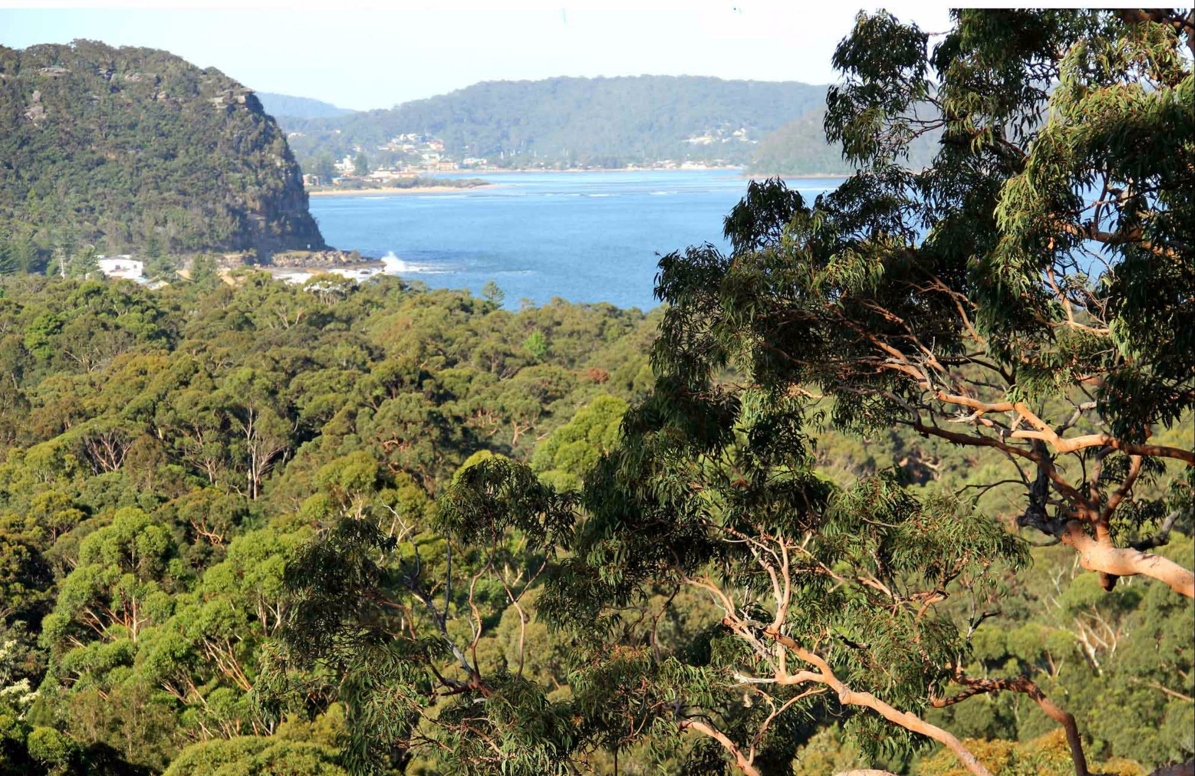 Patonga to Pearl Beach Walking Track - eAccommodation