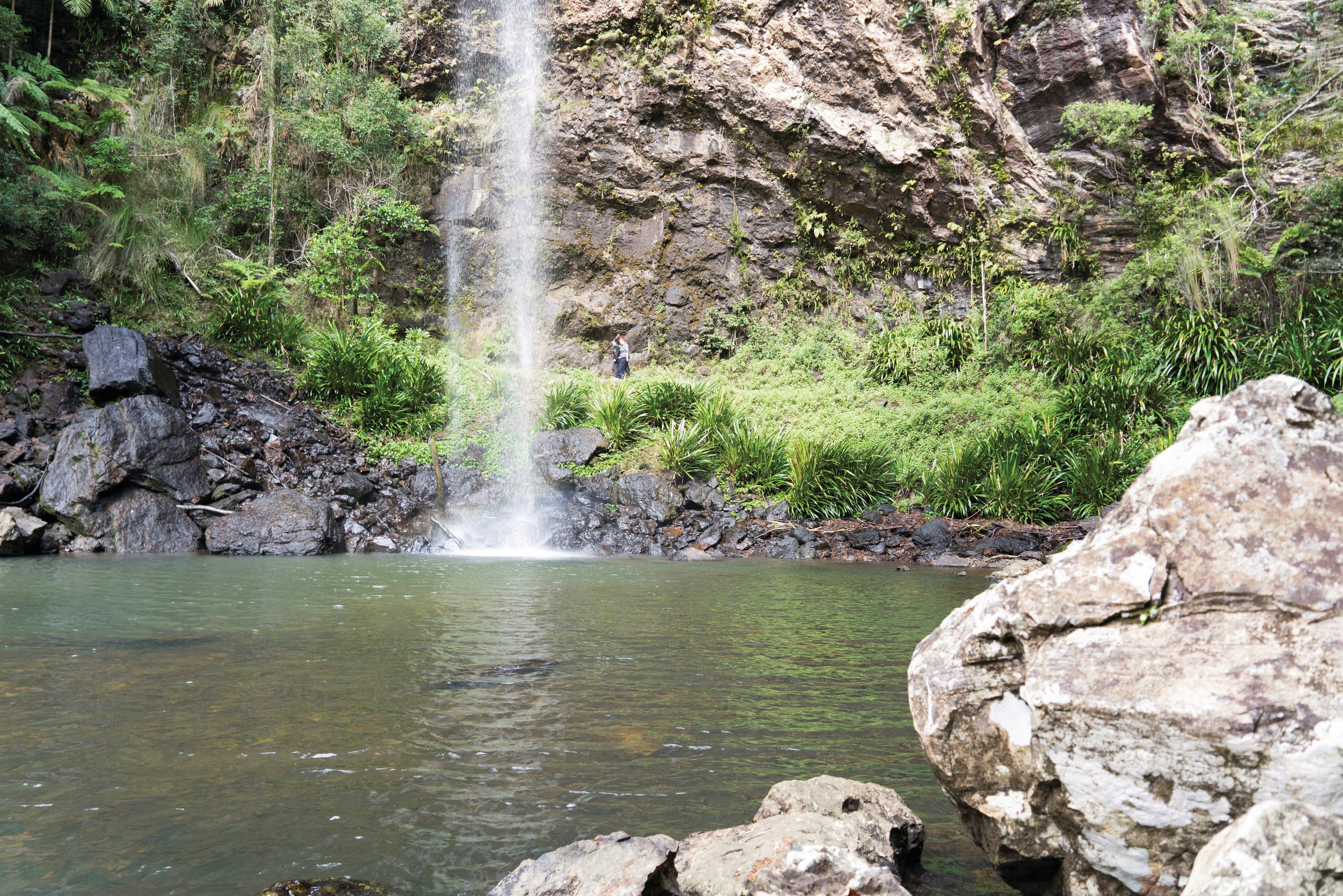 Twin Falls Circuit Springbrook National Park - eAccommodation