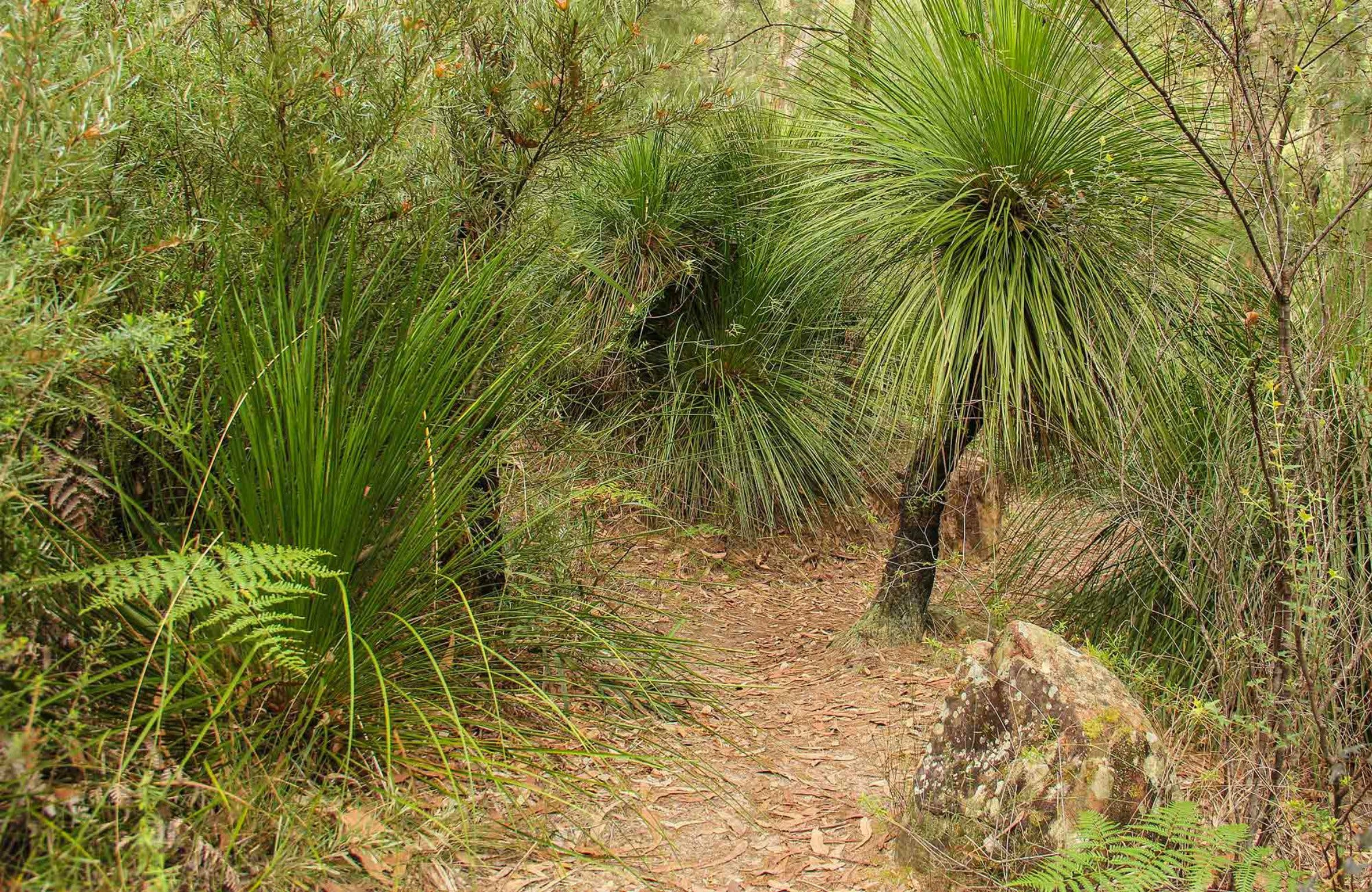 Grass Tree Circuit - eAccommodation