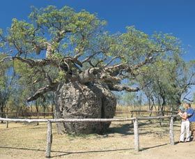 Boab Prison Tree - eAccommodation