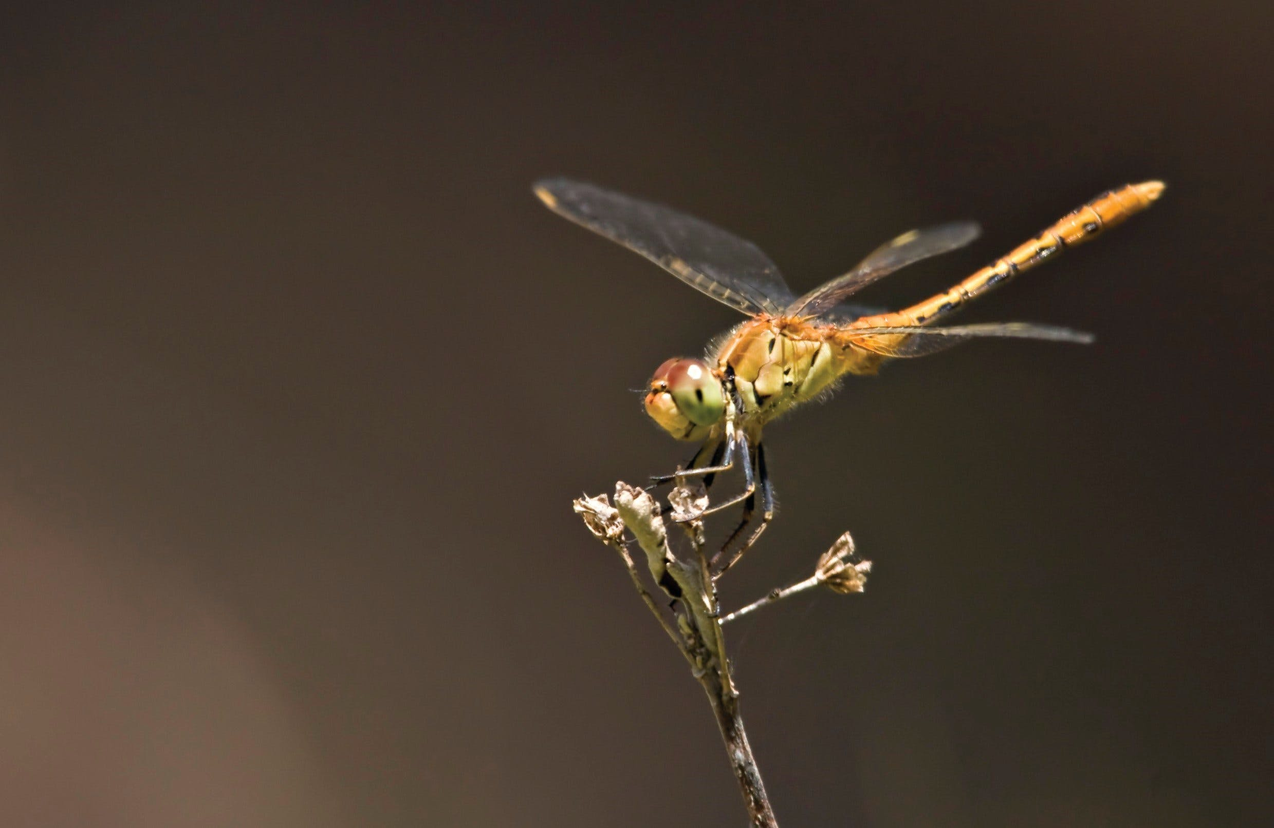 Dragonfly Discovery - eAccommodation