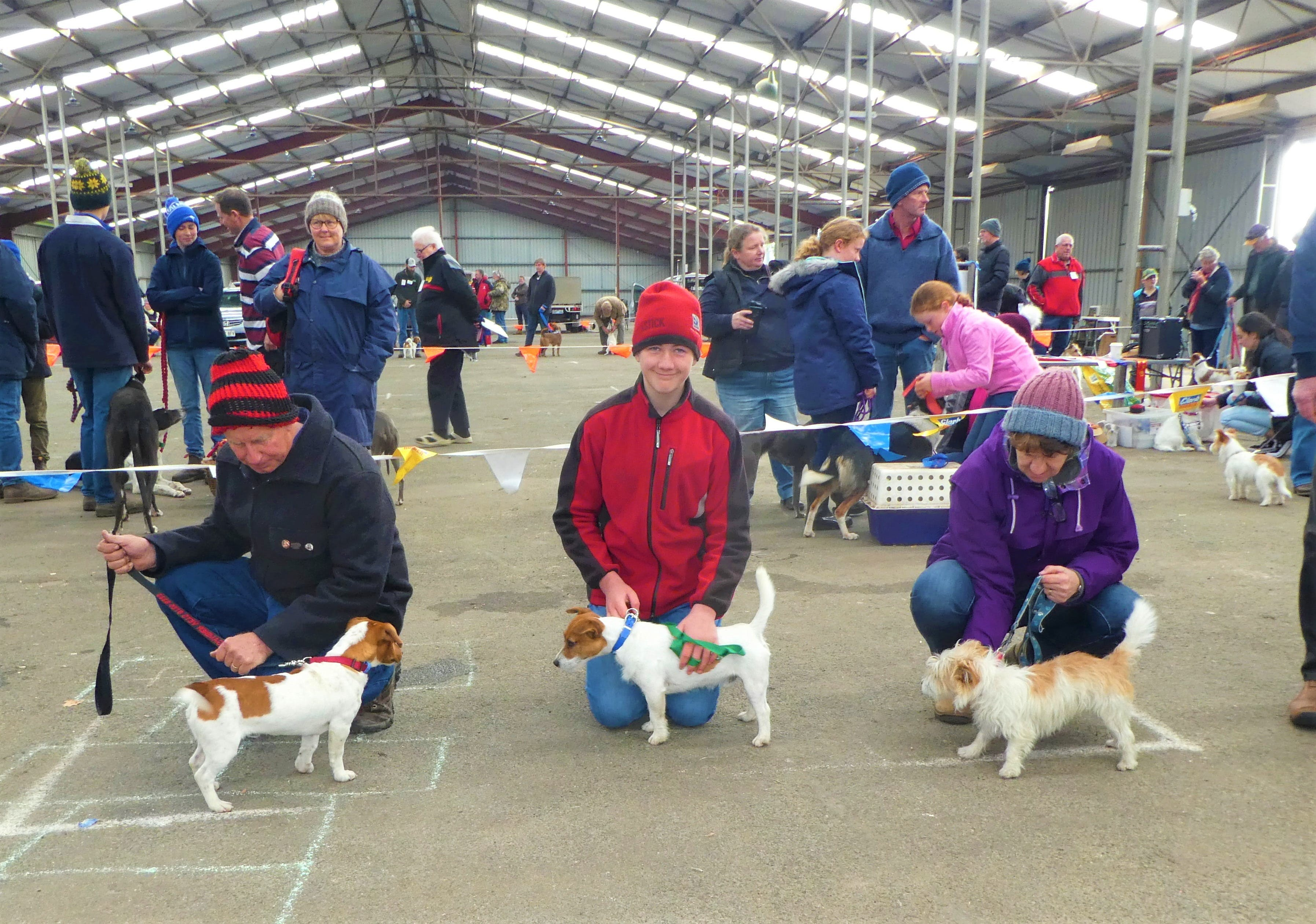 Hamilton Jack Russell Terrier and Hunting Dog Show - eAccommodation