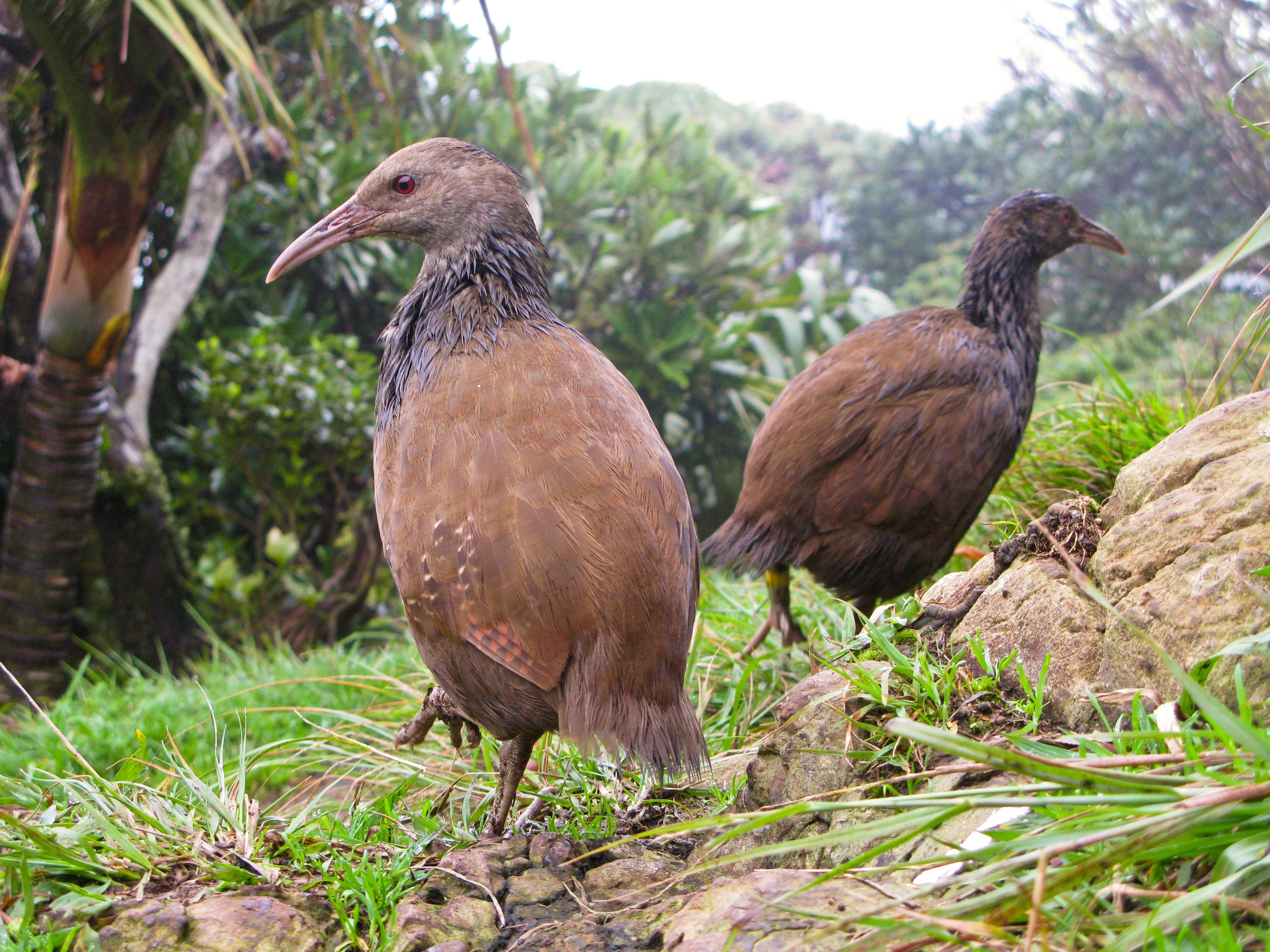 Lord Howe Island Bird Week - eAccommodation