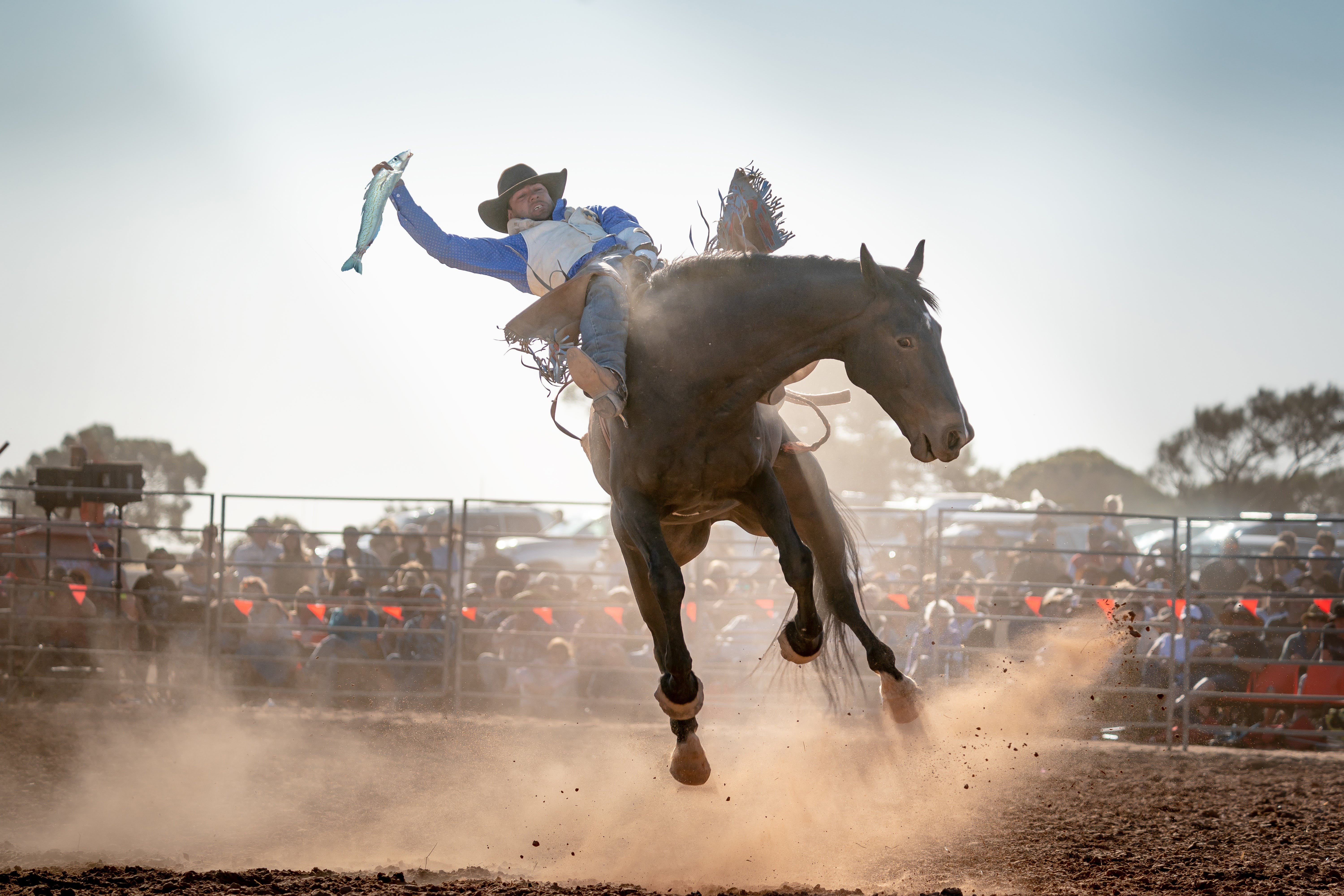 Rodeo by the Sea - Streaky Bay - eAccommodation
